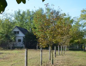 Erdő Szélén Vendégház szálláshely Kiskunmajsa