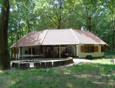 Aranykert Ifjúsági Tábor profil képe - Vének