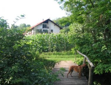 Erdőalja-Vendégház profil képe - Jásd